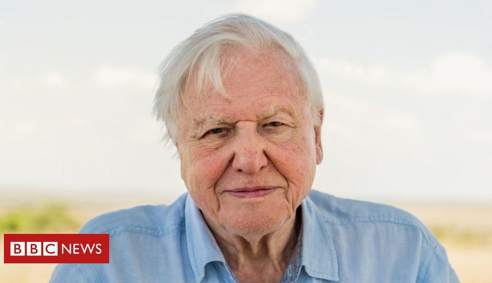 Northern Ireland Sir David Attenborough: Extinction crisis needs action now